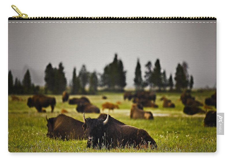 Nature Carry-all Pouch featuring the photograph Foggy Herd by John K Sampson