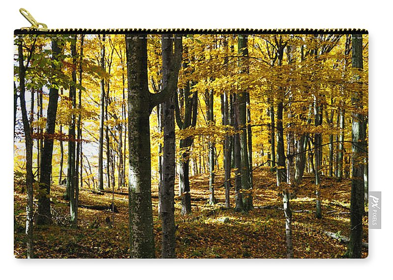 Trees Carry-all Pouch featuring the photograph Forest Floor One by Tim Nyberg