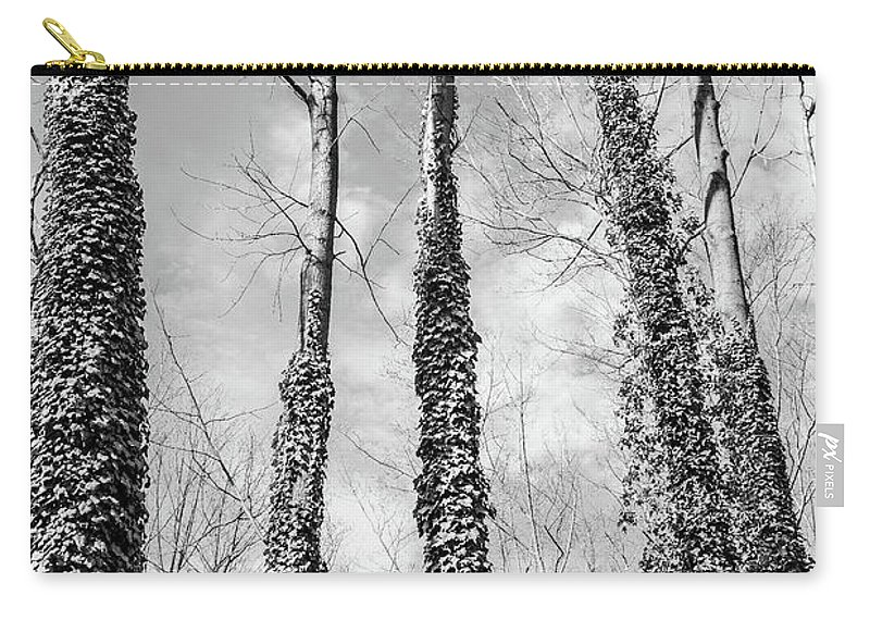 Trees Carry-all Pouch featuring the photograph Forest by Margaret Koc