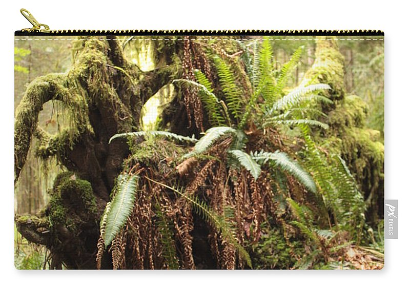 Rainforest Carry-all Pouch featuring the photograph Forest Revival by Carol Groenen