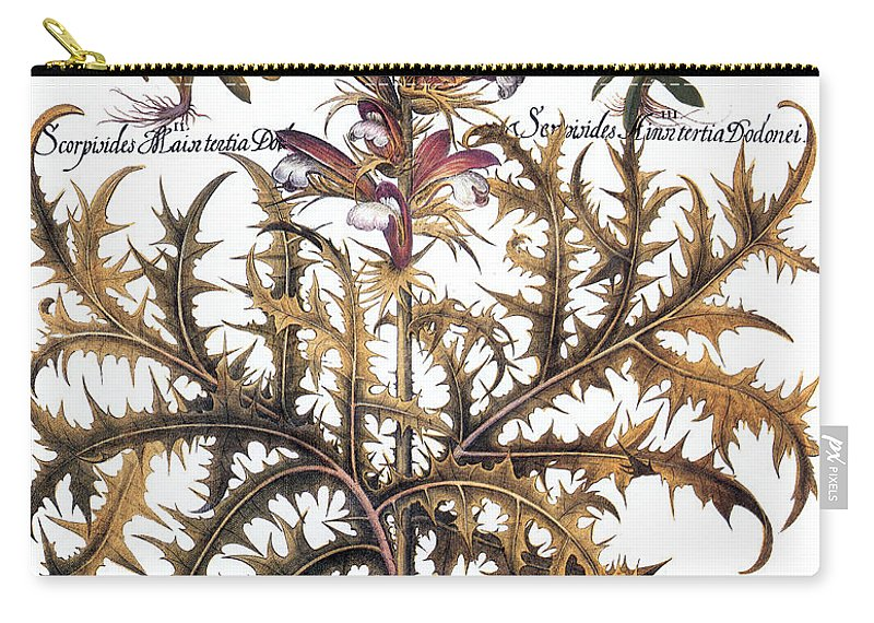 1613 Carry-all Pouch featuring the photograph Forget-me-not & Acanthus by Granger