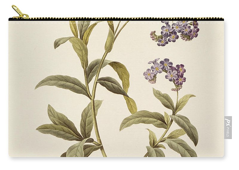 Forget-me-not Carry-all Pouch featuring the drawing Forget Me Not by Pierre Joseph Redoute