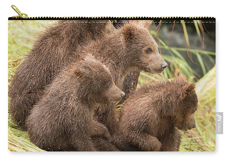 Alaska Carry-all Pouch featuring the photograph Four Bear Cubs Looking In Same Direction by Ndp