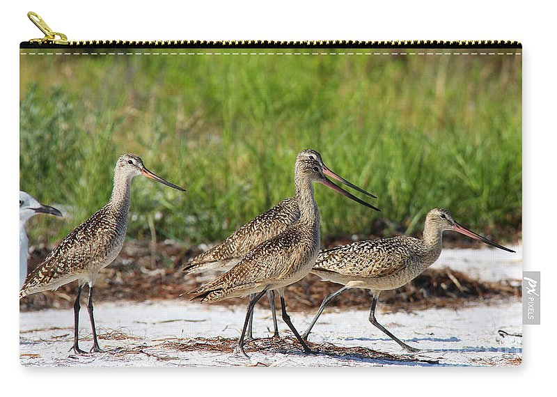 Marbled Godwit Carry-all Pouch featuring the photograph Four Marbled Godwits by Barbara Bowen
