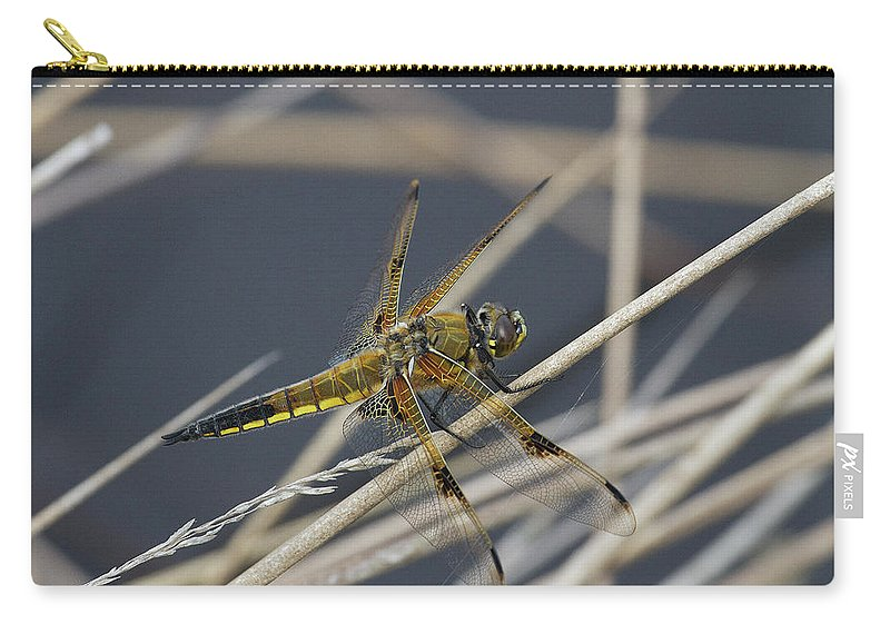 Odonata Carry-all Pouch featuring the photograph Four Spotted Chaser by Bob Kemp