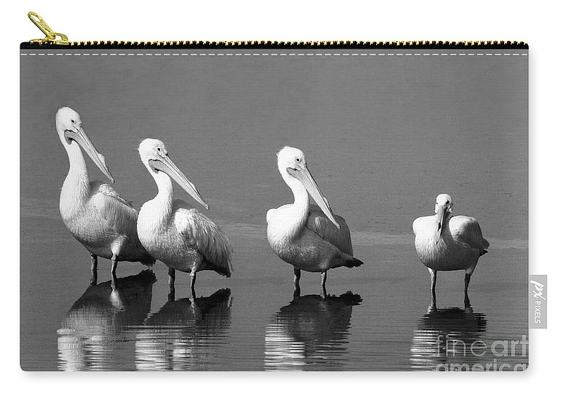 Pelican Carry-all Pouch featuring the photograph Four White Pelicans In A Funny Pose by John Harmon
