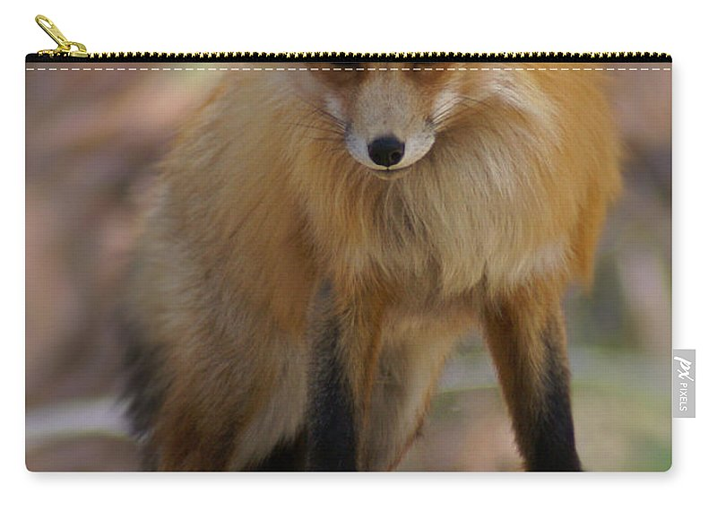 Fox Carry-all Pouch featuring the photograph Fox by Heather Coen