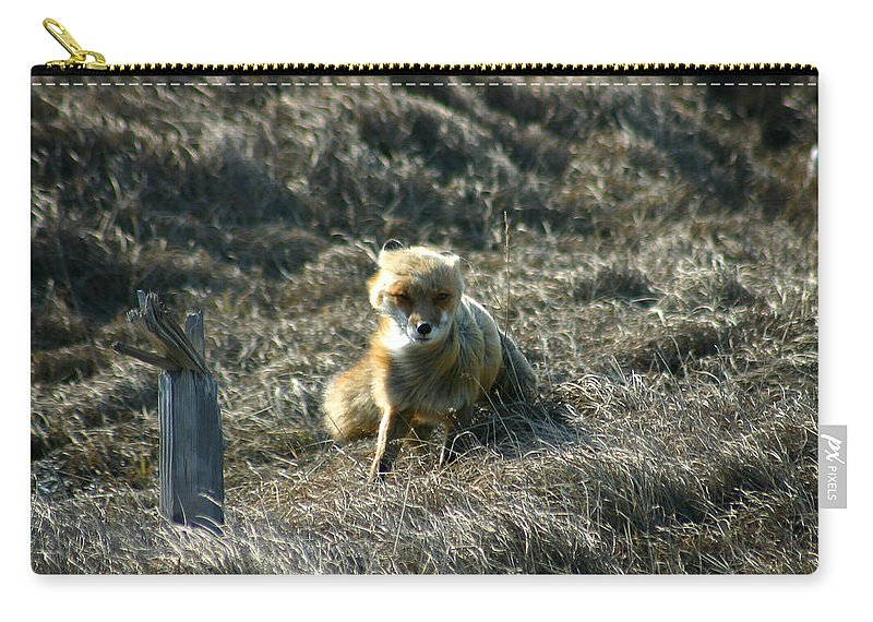Red Fox Carry-all Pouch featuring the photograph Fox In The Wind by Anthony Jones
