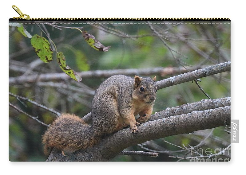 Fox Carry-all Pouch featuring the photograph Fox Squirrel On A Branch by Scott D Van Osdol