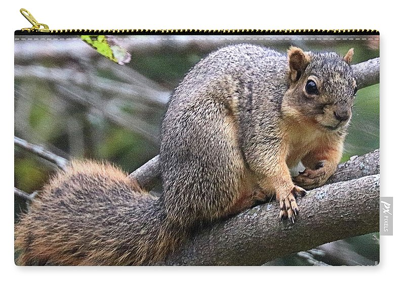 Fox Carry-all Pouch featuring the photograph Fox Squirrel On A Branch - Southern Indiana by Scott D Van Osdol
