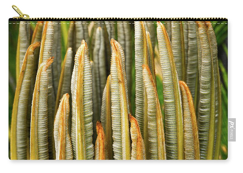 Cycad Carry-all Pouch featuring the photograph Fresh Fronds by Christopher Holmes