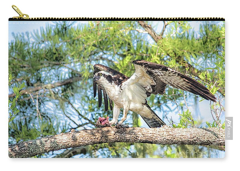 Osprey Carry-all Pouch featuring the photograph Fresh Kill by Christine Martin-Lizzul