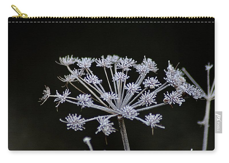 Seed Carry-all Pouch featuring the photograph Frosted Hogweed by Hannah Goddard-Stuart