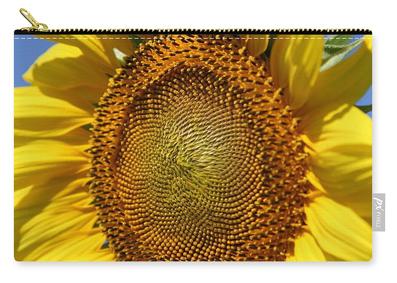 Sunflowers Carry-all Pouch featuring the photograph Full by Amanda Barcon