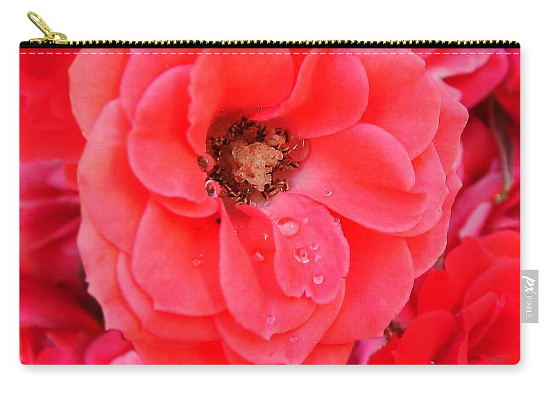 Roses Carry-all Pouch featuring the photograph Full Bloom by Anthony Jones