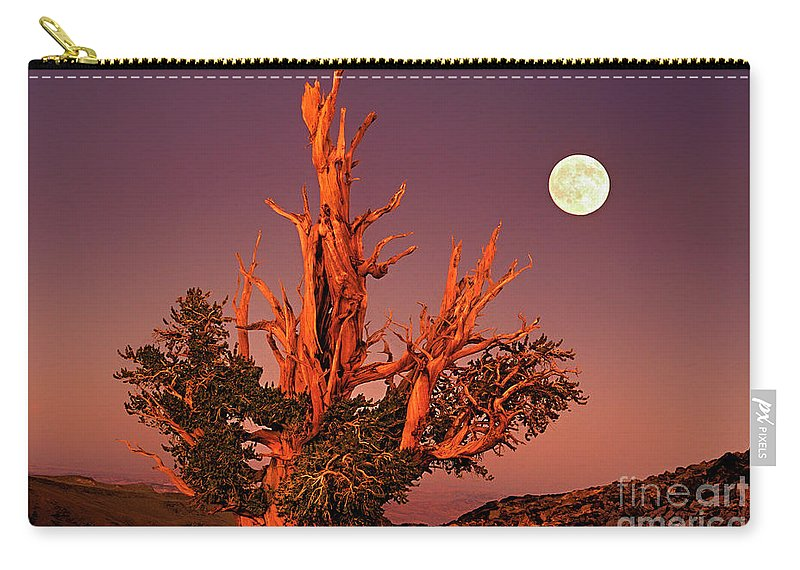 North America Carry-all Pouch featuring the photograph Full Moon Behind Ancient Bristlecone Pine White Mountains California by Dave Welling