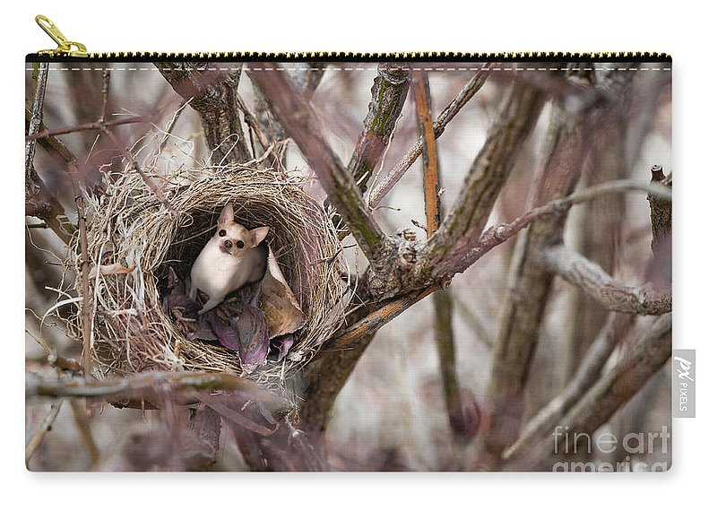 Chihuahua Carry-all Pouch featuring the photograph Funny Little Bird by Mary Raderstorf