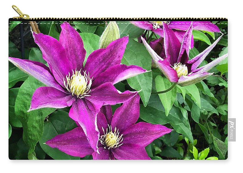 Fuchsia Clematis Flowers Carry-all Pouch featuring the photograph Fushia Clematis Flowers by Jane Maurer