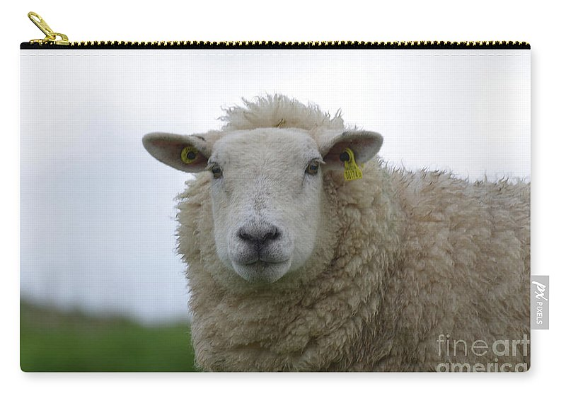 Sheep Carry-all Pouch featuring the photograph Fuzzy White Sheep In A Remote Location by DejaVu Designs