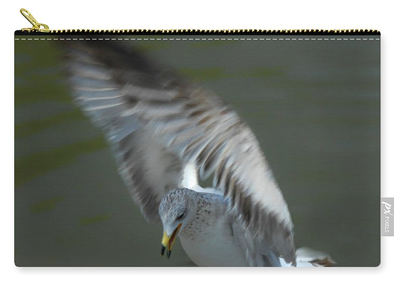 Seagull Carry-all Pouch featuring the photograph Gabriel The Gull by Donna Blackhall