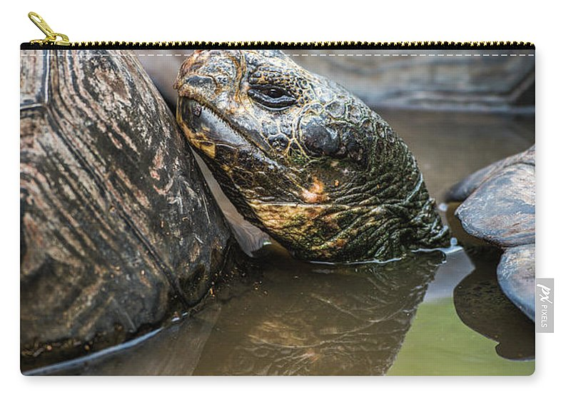 Ecuador Carry-all Pouch featuring the photograph Galapagos Giant Tortoise In Pond Amongst Others by Ndp