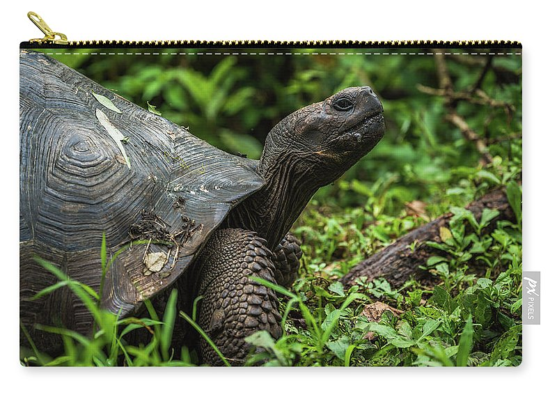 Ecuador Carry-all Pouch featuring the photograph Galapagos Giant Tortoise In Profile In Woods by Ndp