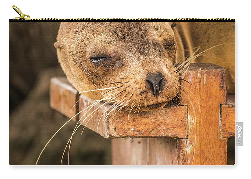 Ecuador Carry-all Pouch featuring the photograph Galapagos Sea Lion Sleeping On Wooden Bench by Ndp