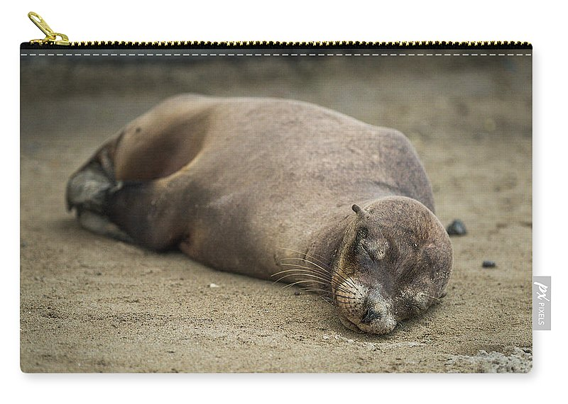 Ecuador Carry-all Pouch featuring the photograph Galapagos Sea Lion Sleeps On Sandy Beach by Ndp