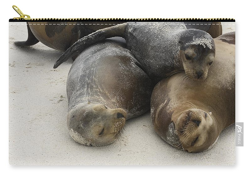 Galapagos Sea Lions Carry-all Pouch featuring the photograph Galapagos Sea Lion Trio by Sally Weigand