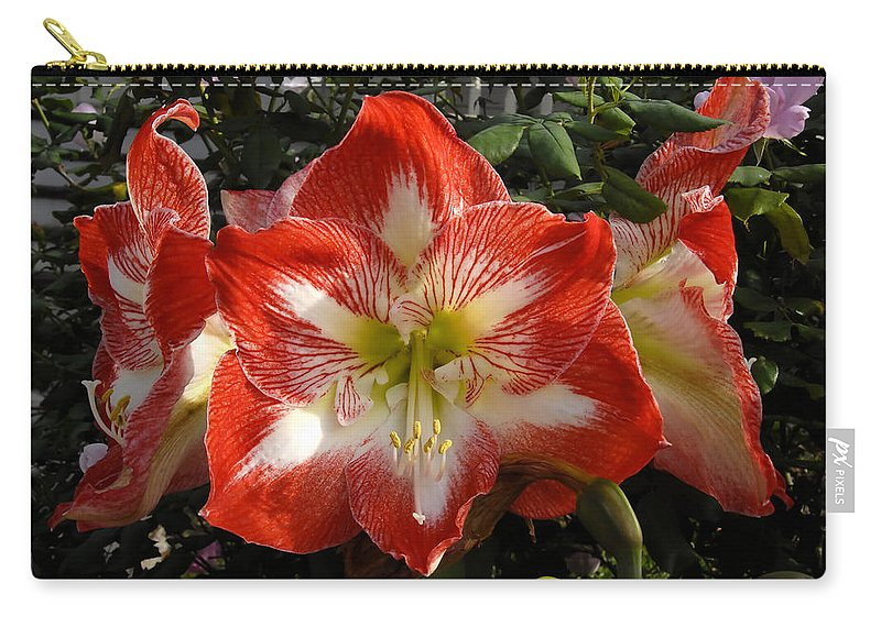 Garden Carry-all Pouch featuring the photograph Garden Flowers by David Lee Thompson
