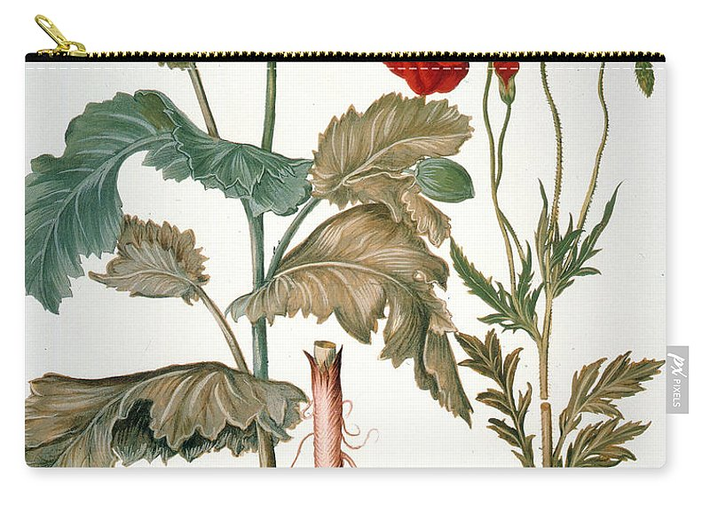 1613 Carry-all Pouch featuring the photograph Garden Poppy by Granger