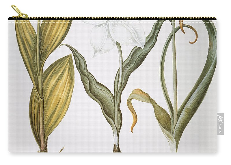 1613 Carry-all Pouch featuring the photograph Garlic, 1613 by Granger