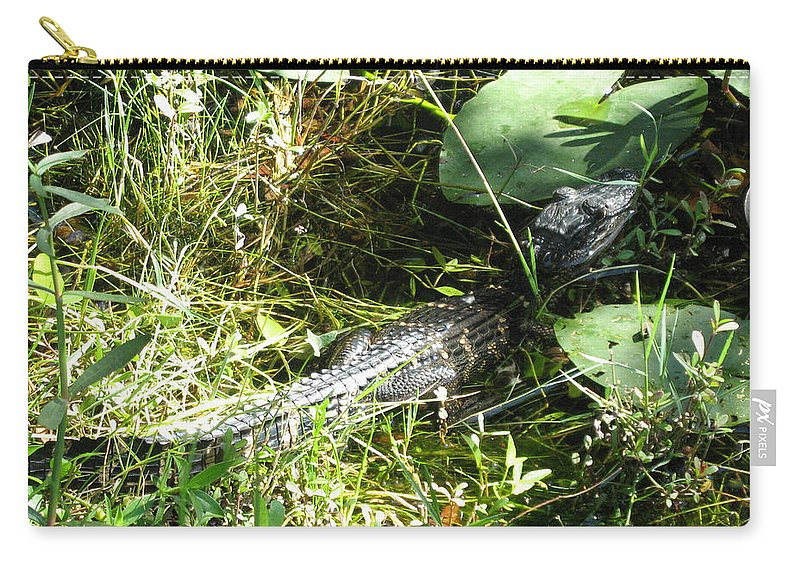 Gator Carry-all Pouch featuring the photograph Gator Baby by Christiane Schulze Art And Photography