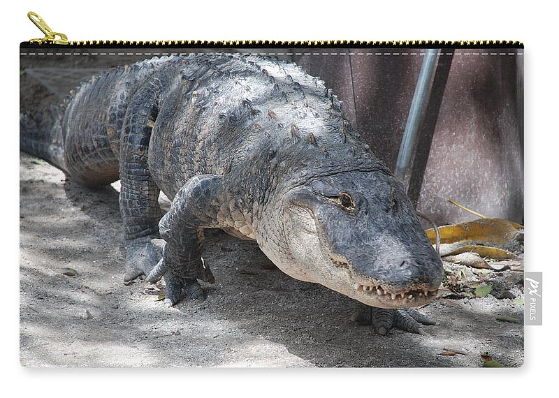 Alligator Carry-all Pouch featuring the photograph Gator On The Move by Rob Hans