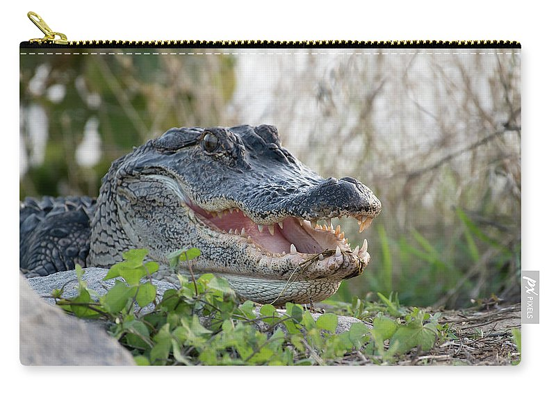 Alligator Carry-all Pouch featuring the photograph Gator Smile by George DeCamp