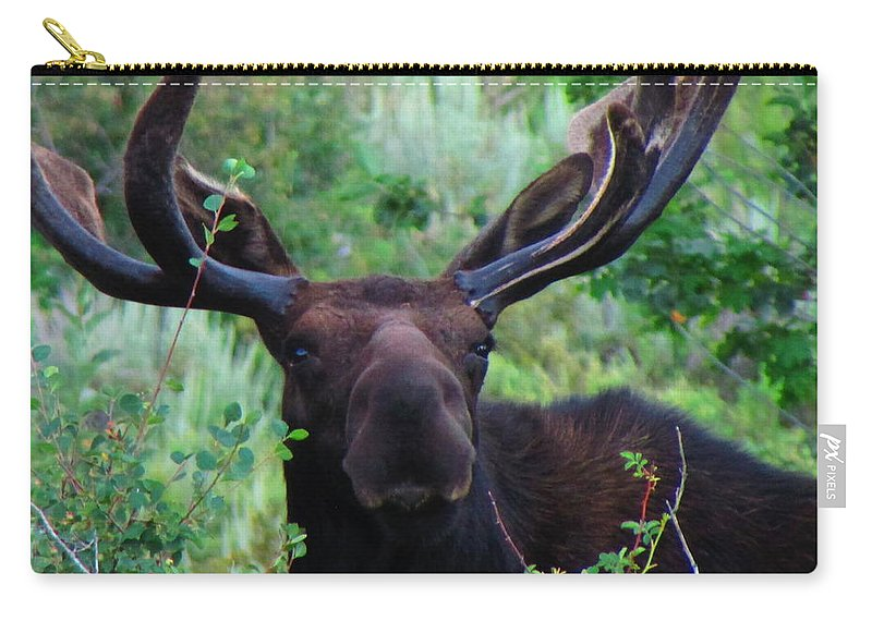 Moose Carry-all Pouch featuring the photograph Gentle Soul by Carol Dyer