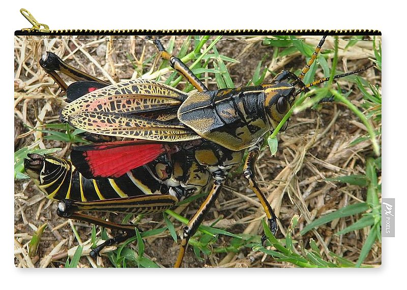 Georgia Thumper Carry-all Pouch featuring the photograph Georgia Thumper by J M Farris Photography