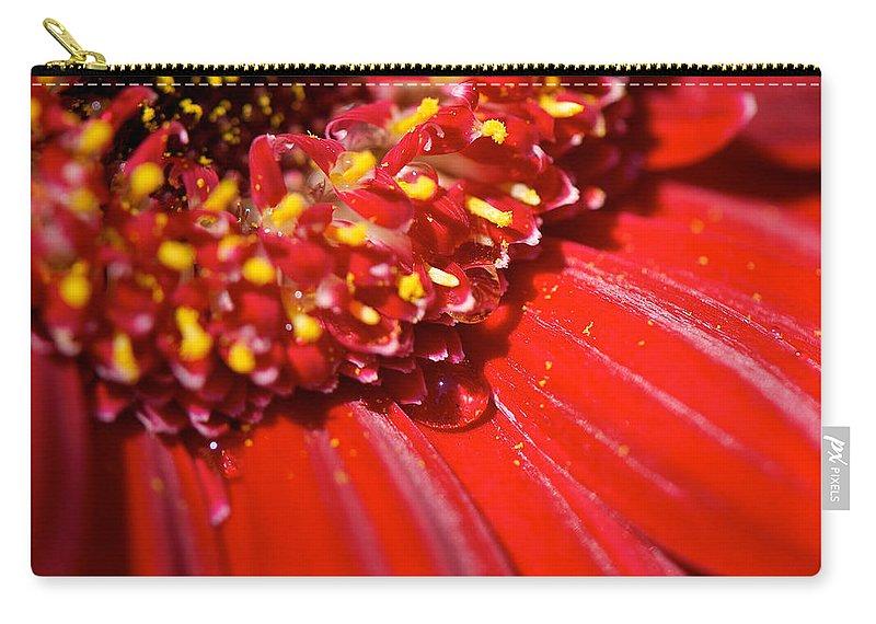Gerber Daisy Carry-all Pouch featuring the photograph Gerber Boa by Lisa Knechtel