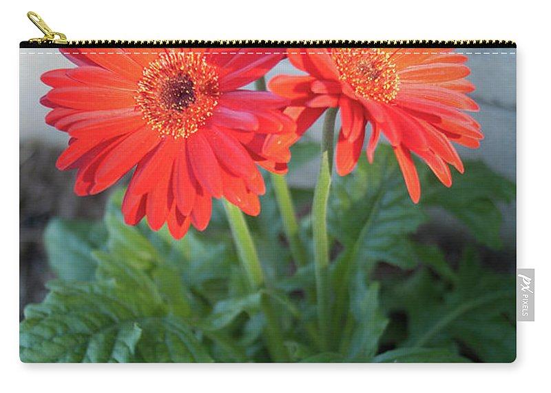 Gerber Carry-all Pouch featuring the photograph Gerber Sunrise Delight by Douglas Barnett