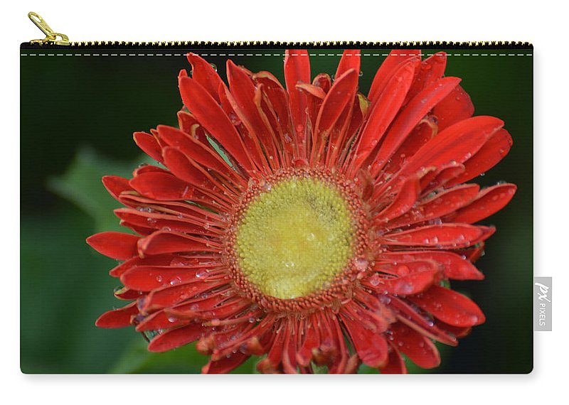 Gerbera Carry-all Pouch featuring the photograph Gerbera Daisy by James Hennis