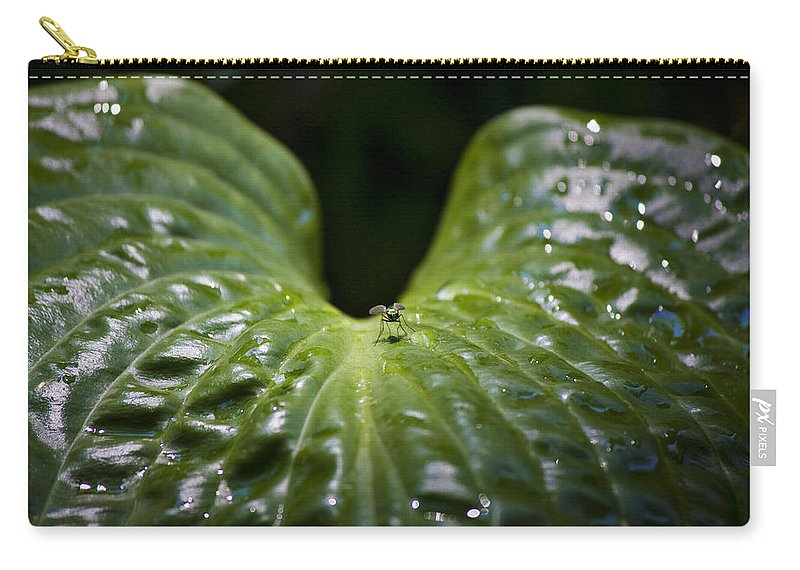 Hosta Carry-all Pouch featuring the photograph Getting A Drink by Teresa Mucha