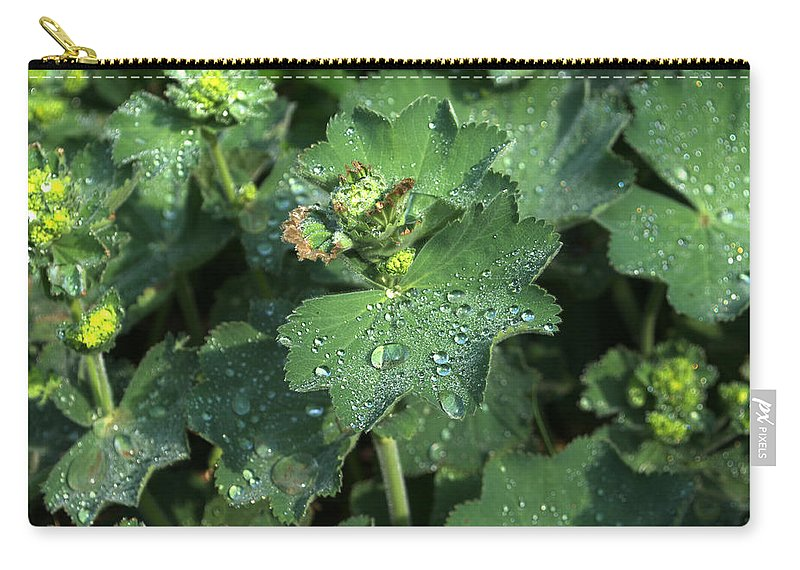 Geum Carry-all Pouch featuring the photograph Geum by Chris Day