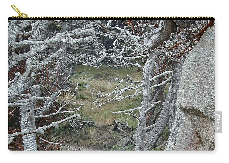 Lichens Carry-all Pouch featuring the photograph Ghost Trees by Douglas Barnett