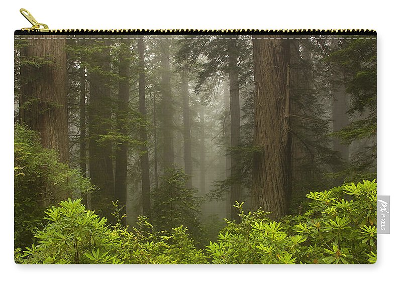 Redwood Carry-all Pouch featuring the photograph Giants In The Mist by Mike Dawson
