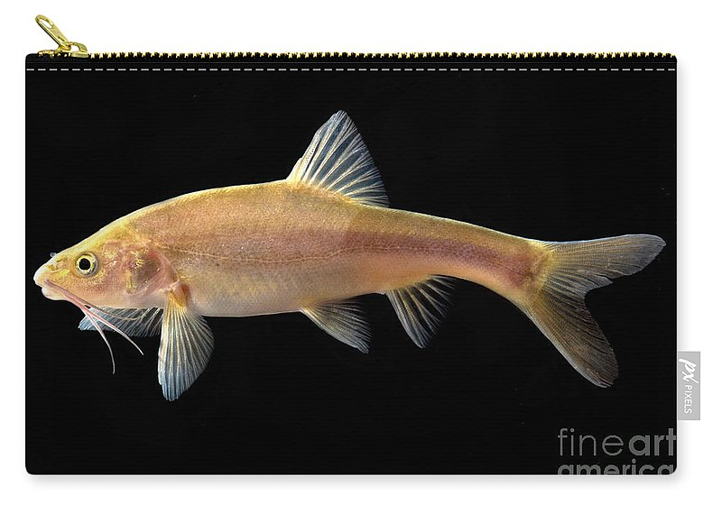 Gii Golden Line Barbel Carry-all Pouch featuring the photograph Gii Golden Line Barbel by Dant� Fenolio