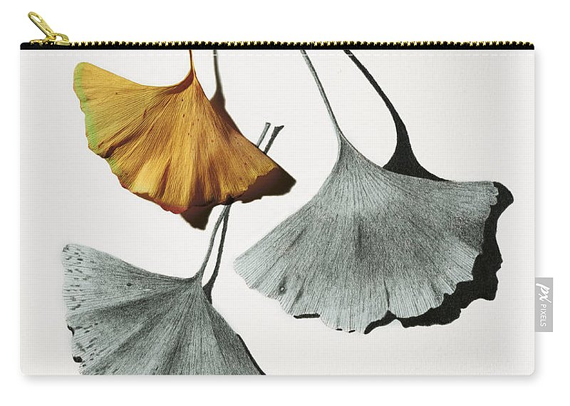 Pencil Drawing Carry-all Pouch featuring the mixed media Ginkgo Leaves by Garry McMichael