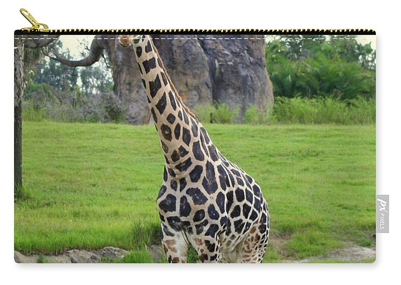 Giraffa Camelopardalis Carry-all Pouch featuring the photograph Giraffe With African Baobob Tree by Anita Hiltz