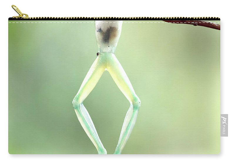 Green Carry-all Pouch featuring the photograph Glass Frog by Linda D Lester