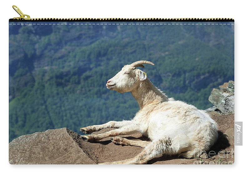 Goat Carry-all Pouch featuring the photograph Goat Enjoy The Sun by Arild Lilleboe