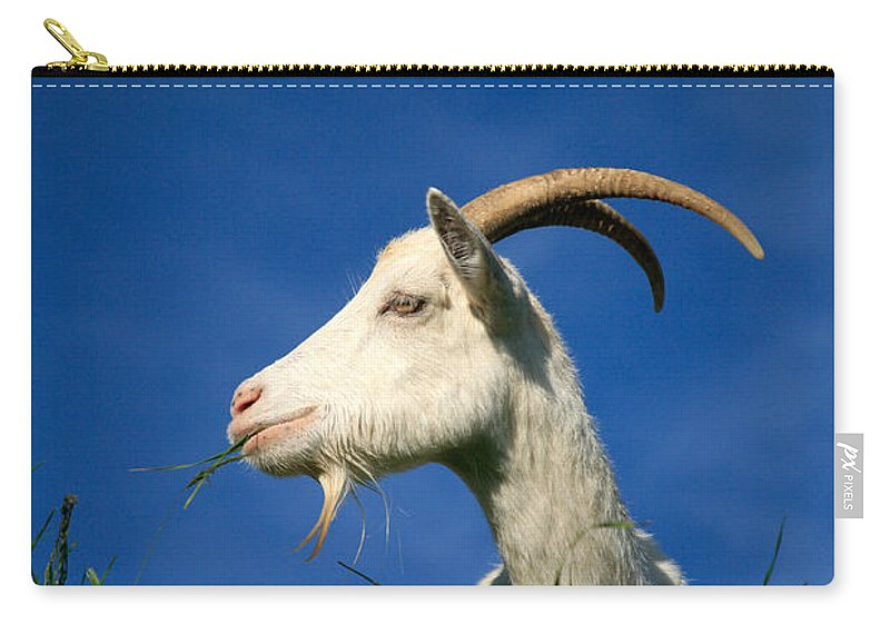 Animals Carry-all Pouch featuring the photograph Goat by Gaspar Avila